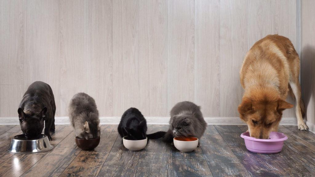 ドッグフードとキャットフードを食べる犬と猫
